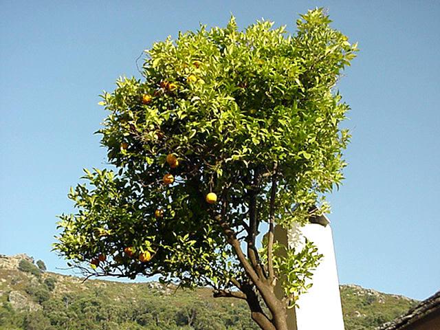 Pflanzen Und Tiere Korsikas